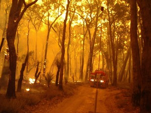 EVENT - 1-bushfire(during) research